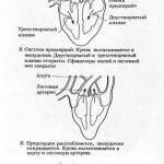 Фазы сердечного цикла ч.№2