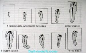 foto-polovoy-organi-devki-soset