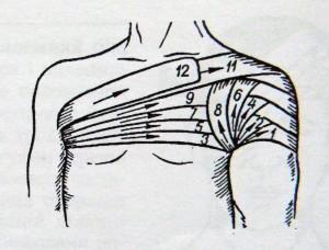 колосовидная на плечевой и коленный суставы