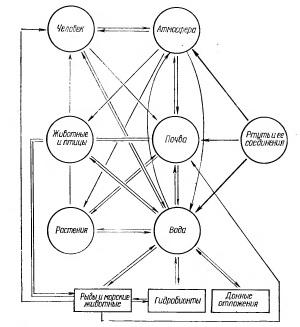 Схема циркуляции ртути в окружающей среде